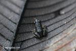 Toad [java_0186]
