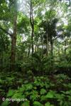 Tropis dataran rendah hutan di Taman Nasional Ujung Kulon