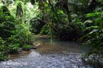 Rain forest stream in Ujung Kulon