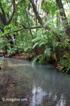Jungle stream in Ujung Kulon