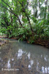 Lowland jungle stream in Ujung Kulon