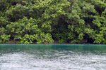 Rainforest and turquoise ocean