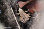 Frog [java_0350]