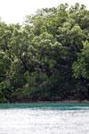 Garis pantai Pulau Peucang