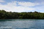 Peucang Island, West Java, Indonesia [java_0420]