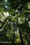 Pulau Peucang hutan hujan