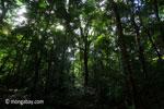 Peucang Island forest