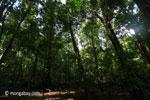 Peucang Island rain forest