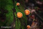Orange fungi