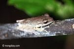 Frog [java_0619]