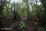 Javan hutan hujan