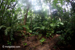 Javan jungle [java_0719]