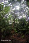 Javan tropical forest