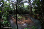 Lowland rainforest stream in Java's Ujung Kulon National Park