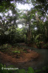 Lowland jungle creek in Java's Ujung Kulon National Park