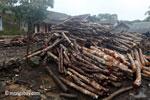 Teak log dump outside an Indonesian sawmill