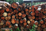 Pile of round logs at an Indonesia sawmill