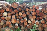 Pile of round logs at a sawmill