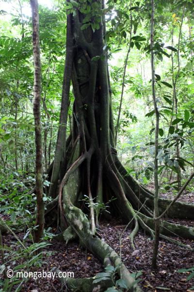 Ujung Kulon rain forest