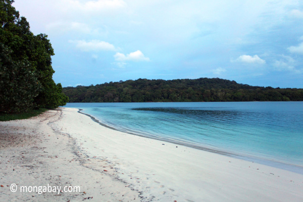 Beach on Peucang Island overlooks the ocean. Photo by: Rhett A. Butler.