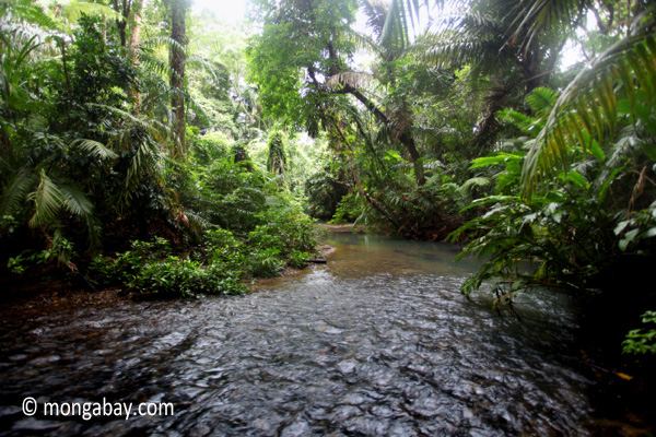 Rainforest creek in Ujung Kulon