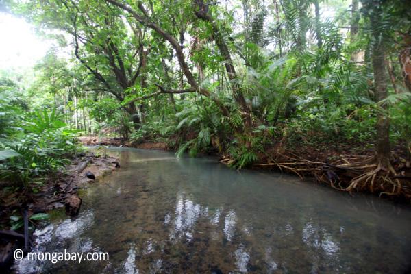 Jungle creek in Ujung Kulon N.P.