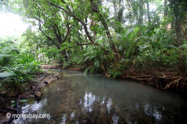 lowland jungle creek in ujung kulon national park