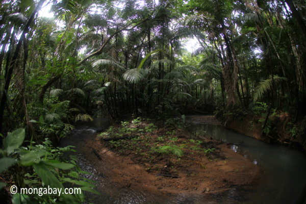 Lowland jungle stream in Java's Ujung Kulon National Park