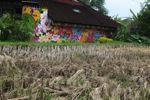 Dry beras dan rumah berwarna-warni di Bali