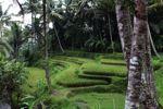 Terraced sawah di Gunung Kawi