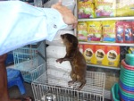 Pet otter for sale in the animal market in Jakarta [java_0018]