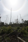 Deforested peat forest in West Kalimantan, Indonesia [kalbar_0031]