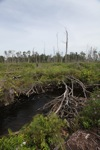 Deforestasi hutan gambut di Kalimantan Barat, Indonesia