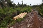 Illegal logging di hutan hujan Borneo Indonesia