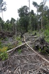 Deforested peat forest in West Kalimantan, Indonesia [kalbar_0064]