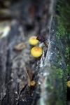 Orange mushroom [kalbar_0075]