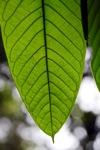 Rainforest lead [kalbar_0176]