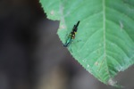Rainbow-colored grasshopper