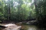 Rope bridge over a rain forest creek