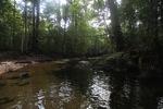 Bridge over a rainforest creek at Cabang Panti research station [kalbar_0264]