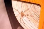 Spider [kalbar_0274]