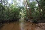 Clear jungle creek [kalbar_0277]