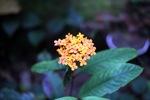 Oranye bunga di hutan hujan Kalimantan