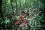 Reddish-brown fungi in the rainforest [kalbar_0334]