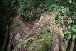 Fungi on a rotting log [kalbar_0400]