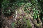 Fungi on a rotting log [kalbar_0395]