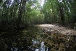 Clear water stream in Gunung Palung, Indonesian Borneo [kalbar_0440]