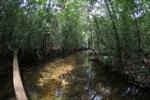 Hutan hujan sungai di Gunung Palung, Kalimantan, Indonesia