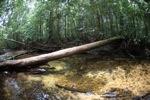 Rainforest stream in Gunung Palung, Indonesian Borneo [kalbar_0449]