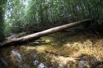 Rainforest stream in Gunung Palung, Indonesian Borneo [kalbar_0447]